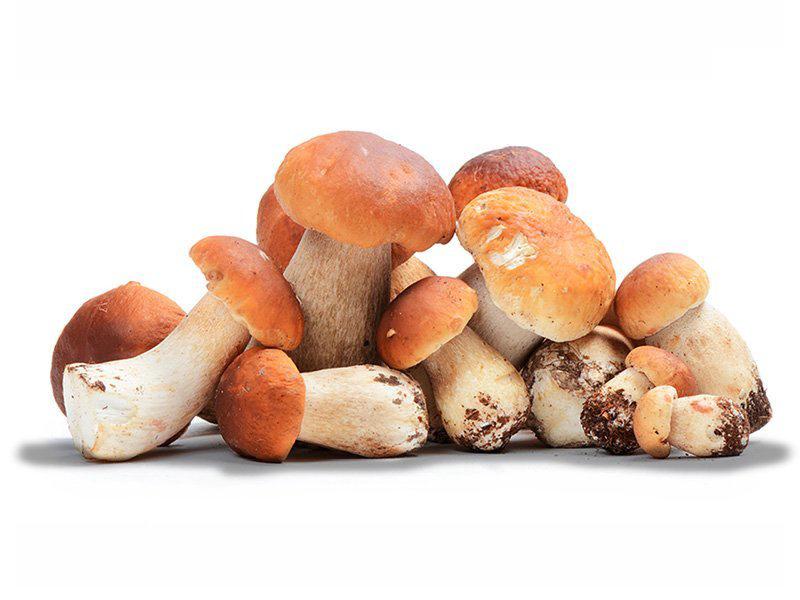 Ristorante Marcello Torino - materie prime - funghi